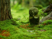 A moss covered Jizo statue in the Sanzenin garden.
