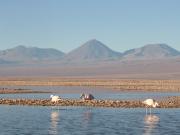 Atacama Salt Flat & Toconao (2)