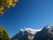 Grindelwald6