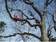 treeing-4