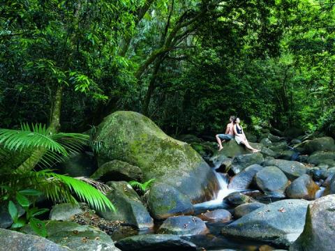 Rainforest Tour 7