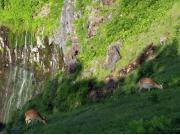 フレペ:滝とシカ