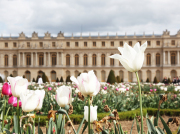 EXT_Flowers-and-Palace-in-background