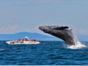 FEATURE-Humpback-whale-putting-on-a-show-for-Eaglewing-passengers-900x500