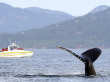 Whale-Tales-photo-Valerie-Shore-900x500