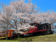 Cherry trees and retro trains in Kyoto