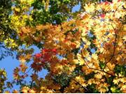 秋:紅葉ハイキング