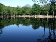 初夏:幻の沼へ行く原生林ハイク