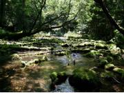 夏:清流の森ウォーク