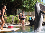 dolphin_quest08
