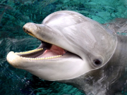 dolphin_quest04