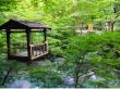 Oku-Iya Niju Kazura Bashi Double Vine Bridge