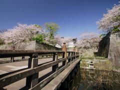 鶴丸城跡 春は桜がきれいです。