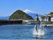 富士山イルカジャンプ