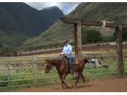 basic horsemanship lesson
