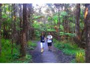 Trail at Kilauea
