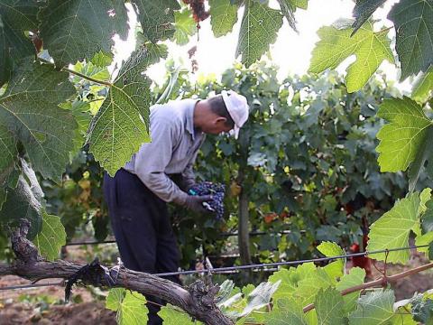 toledo_madrid_day_tour_wine_tasting_finca_loranque14