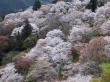 Mount Yoshino2