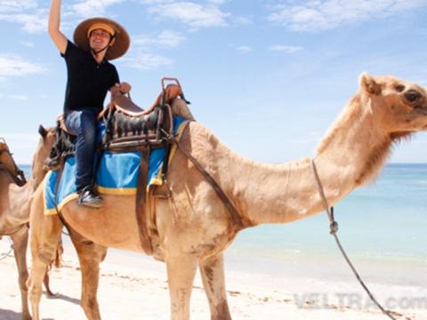 camel_safari_ritz-1011