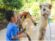 camel_safari_ritz-1029