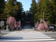 151231_kongobuji_spring01