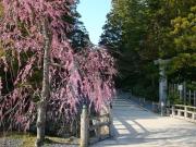 151231_kongobuji_spring02
