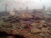 マリンスノー海中1