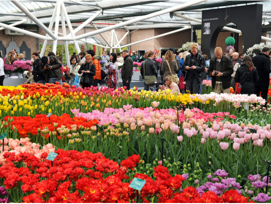 2 Hour Introductory Amsterdam Tour Plus 5 Hour Trip To Keukenhof Flower  Gardens To See Tulip Fields.