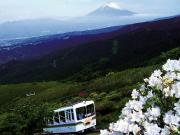 富士山とツツジ