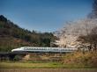 Shinkansen and Cherry Blossoms