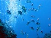 20150511004529_373301_underwater001