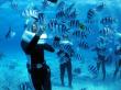 Feeding tropical fish in Okinawa