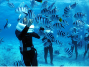 Walking underwater, feeding tropical fish