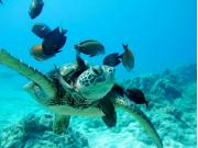 ocean-joy-turtle