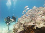 コスメル島体験ダイビング