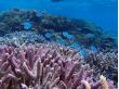 珊瑚 (1) 海猫02