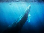 humpback_cmichel67