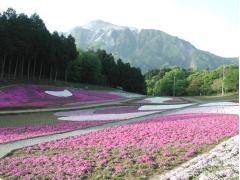芝桜羊山公園