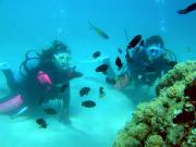 奄美大島ダイビングエンドレスブルー7