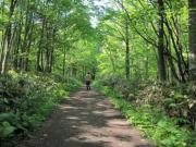 森林ノルディックウォーキング 3