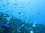 プール講習付伊豆半島ダイビング アクア・ブーチェ06