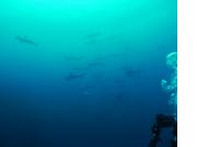 Diving club 海音