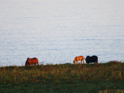 琵琶湖展望台からの景色