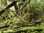 白谷水雲峡&太鼓岩トレッキング07