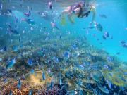 シュノーケル5 素晴らしかった魚の数