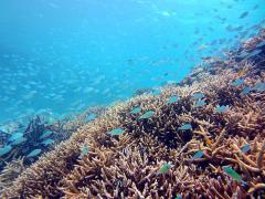 竹富島満喫1日コース 2 青い海