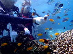 Adult and child coral reef diving in Okinawa