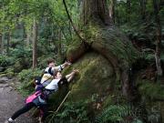 絶景の天狗倉山と熊野古道馬越峠4