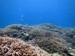 Coco Dive28