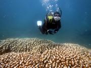 Coco Dive41